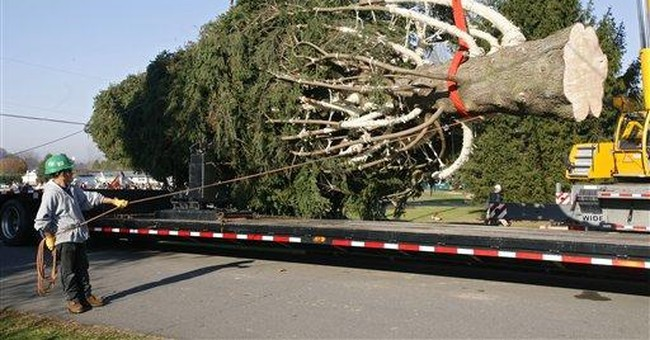 Rockefeller Center Christmas Tree coming from Pa.