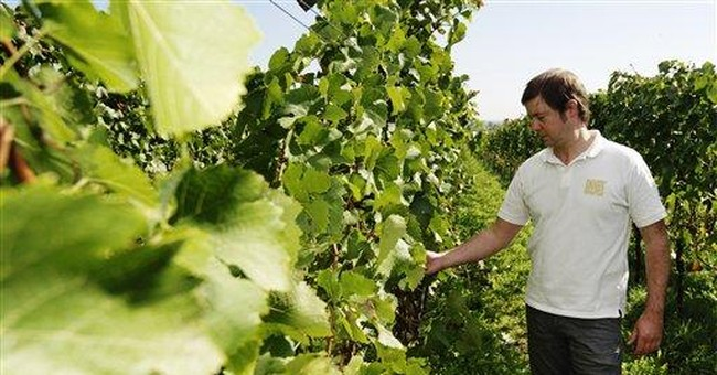 Who is stealing Germany's grapes?