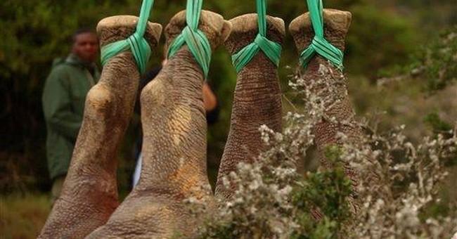 Poaching blamed for loss of Western Black Rhino
