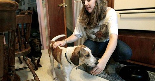 Dog that survived gassing finds new home in NJ