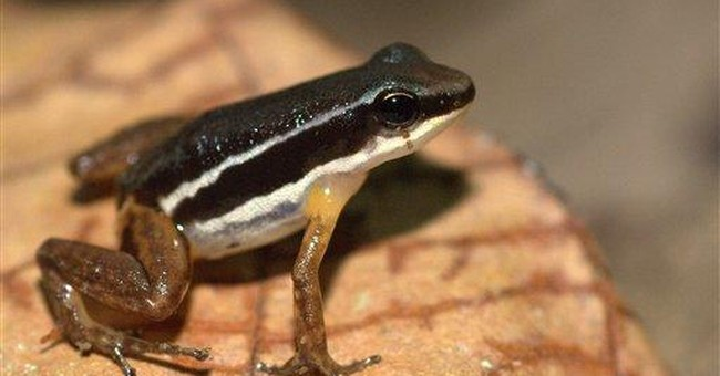Study: Triple threat paints grim future for frogs