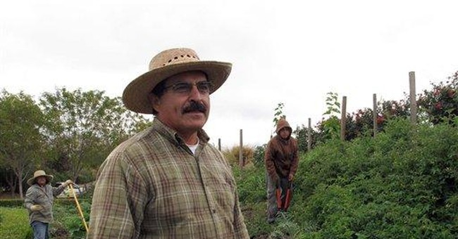 Agricultural program helps keep youth out of gangs