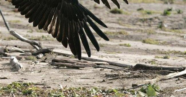 Eagles' freedom flight _'a really joyous moment'