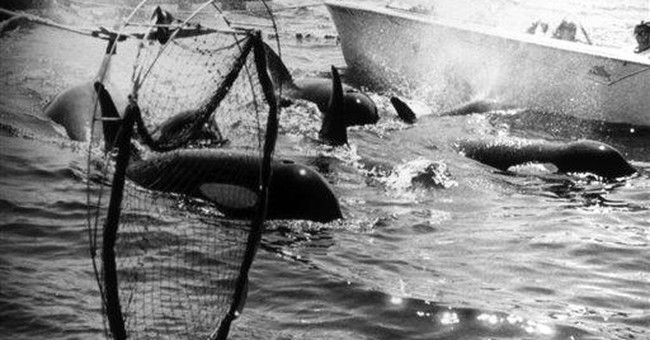 Whale activists sue to free Lolita from captivity