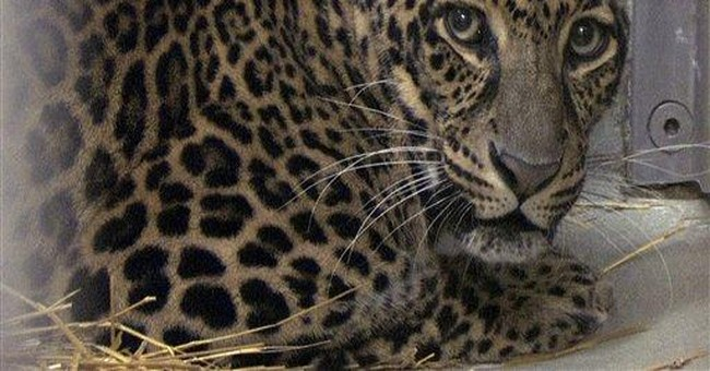 Ohio sets tentative date to test 6 exotic animals