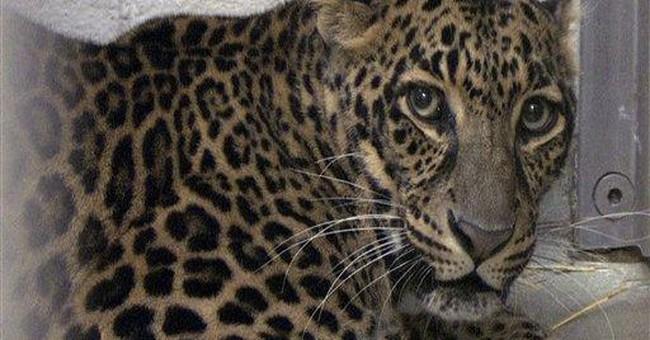 Group honors Ohio sheriff who led wild animal hunt
