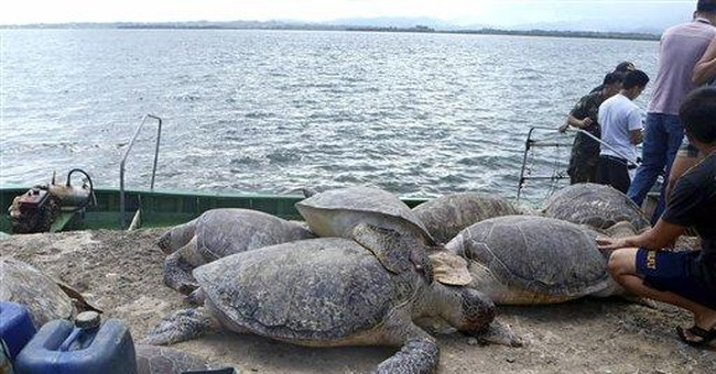 6 Chinese charged for turtle catch in Philippines