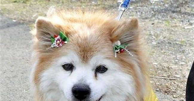 World's oldest dog dies in Japan at age 26
