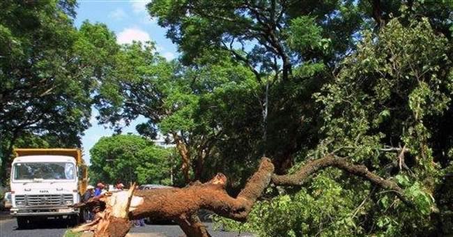 "Zimbabwe's ""Hanging Tree"" falls, revives legends"