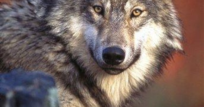 Admin moves to clarify endangered species listings