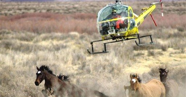 BLM: Mustangs mistreated but not inhumanely