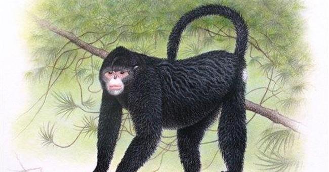 'Elvis' monkey, psychedelic gecko found in SE Asia