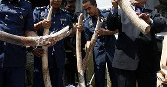 Malaysia seizes hundreds of African elephant tusks