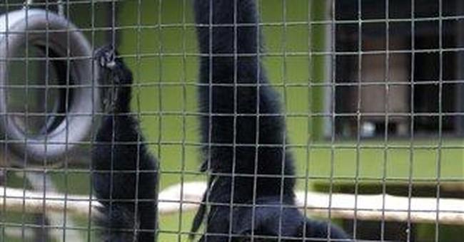 Gibbon attacks 2 children in Malaysia zoo escape
