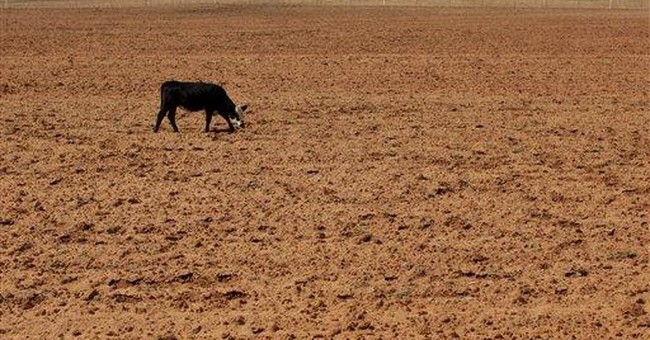 Texas drought takes cow numbers down by 600K