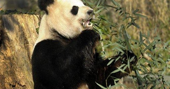National Zoo gets $4.5 million for panda breeding