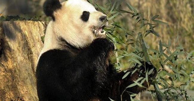 National Zoo gets $4.5 million for panda breeding