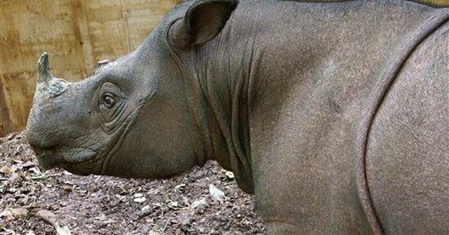 Rare Malaysian rhino gets new mate to save species