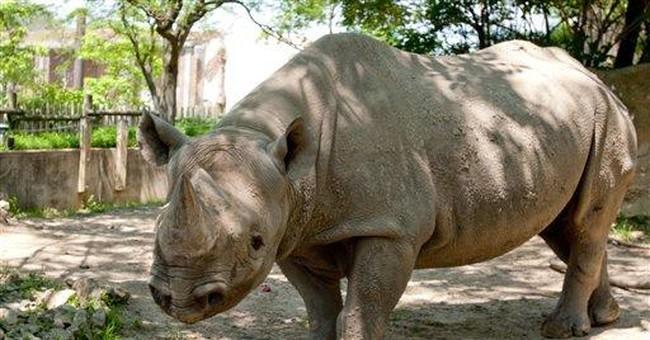 Ohio zoo: African black rhino dies after illness