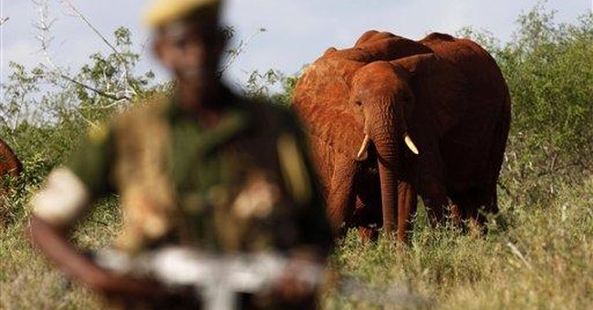 Worst year in decades for endangered elephants