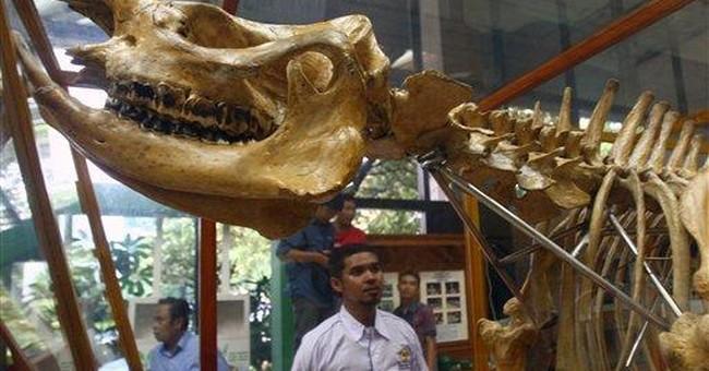 Camera traps capture 35 rhino in Indonesian park