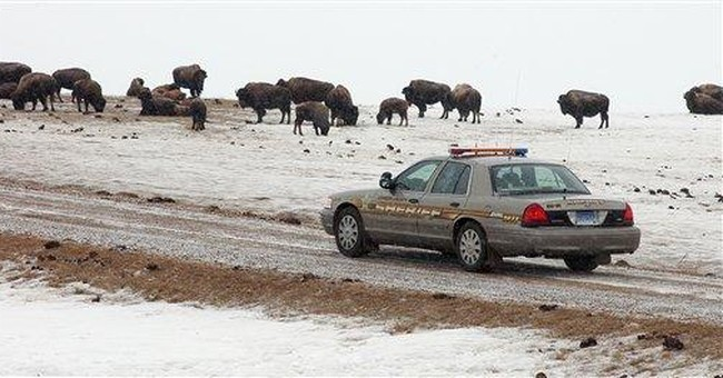 SD sheriff now oversees more bison than people