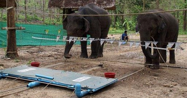 Elephants are quick learners, offer helping hand