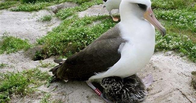 Scientists: Oldest wild bird in US is new mother