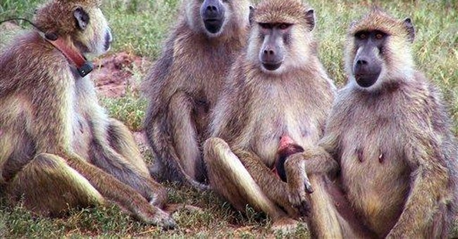 Study: Humans, apes, have similar aging patterns