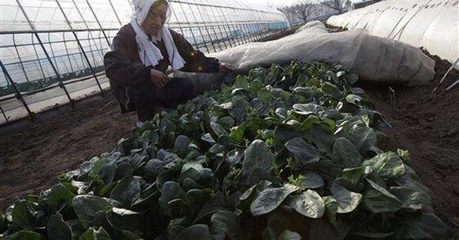 WHO: Real risk if radiation contaminates food