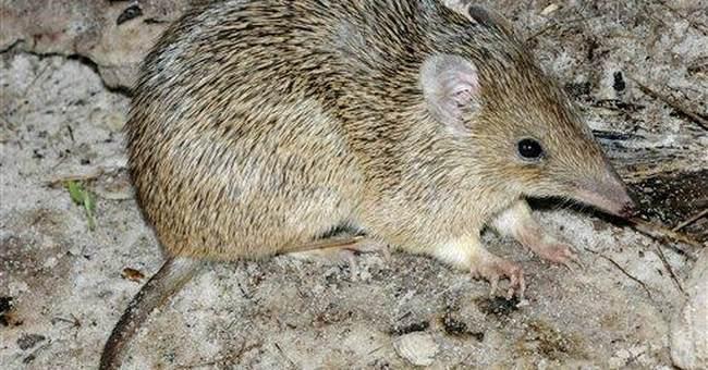 Extinction threat for 45 Australian species