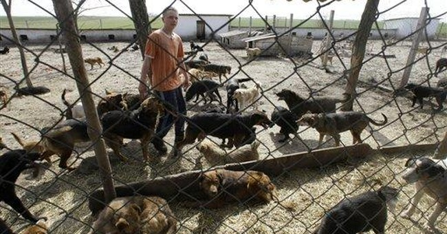 Flooded with stray dogs, Serbia struggles to cope