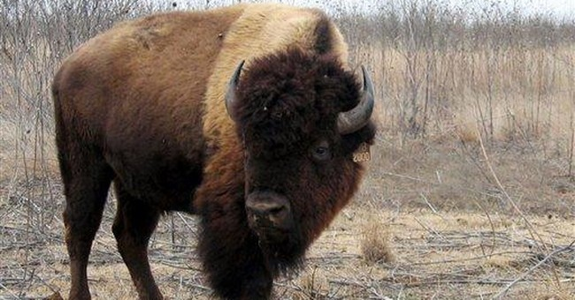 Ted Turner's bison help save historic Texas herd