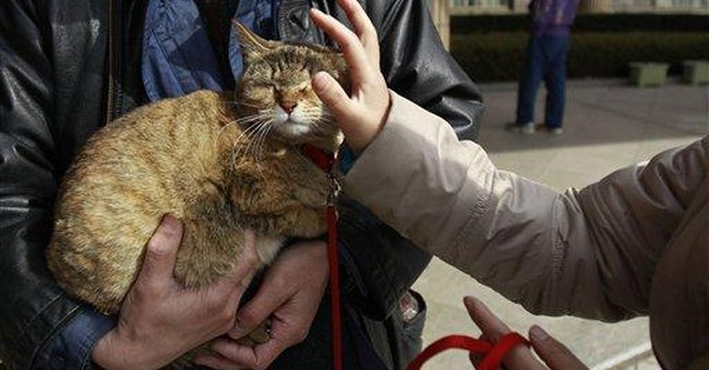 Japan's disaster puts pets in dire need