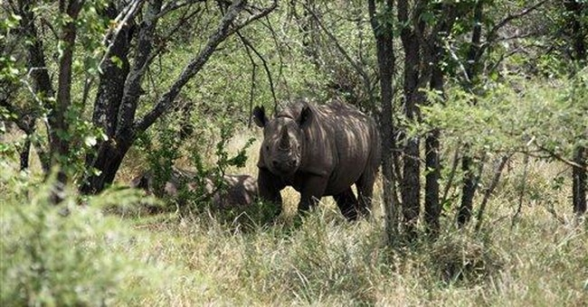 Rhinos slaughtered for horns worth more than gold