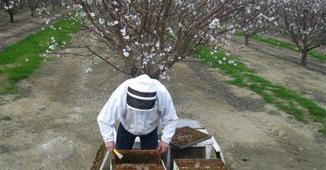 Proposal to tax Calif. beekeepers stirs up swarm