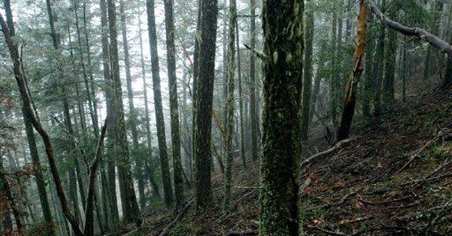 Judge finds logging plan withdrawn illegally