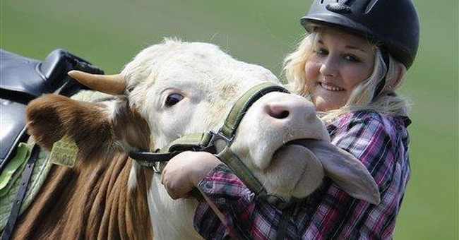 Horse dreams dashed, German teen turns to cow Luna