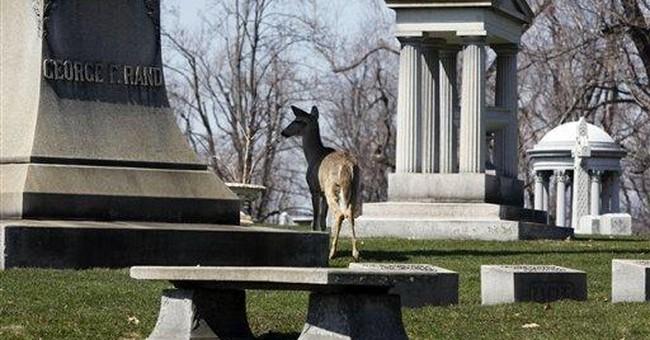 Deer, goose make unlikely pair in Buffalo cemetery