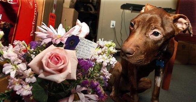Pit bull abandoned in NJ gains worldwide following