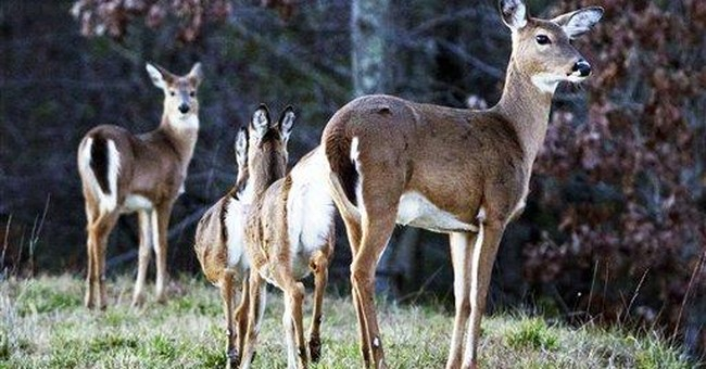 Important Sunday Hunting Bill Clears Hurdle in Virginia
