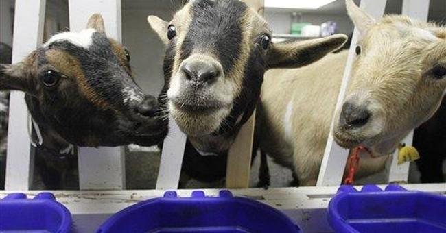 Small dairies create market for entrepreneurs