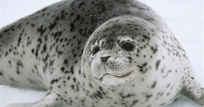 US, Russia to begin Bering Sea seal survey