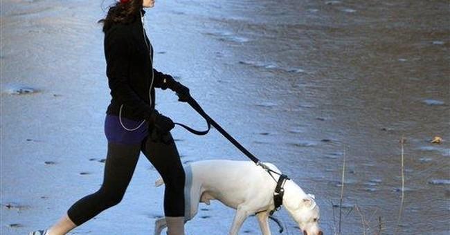 Pet insurance guards against big vet bills