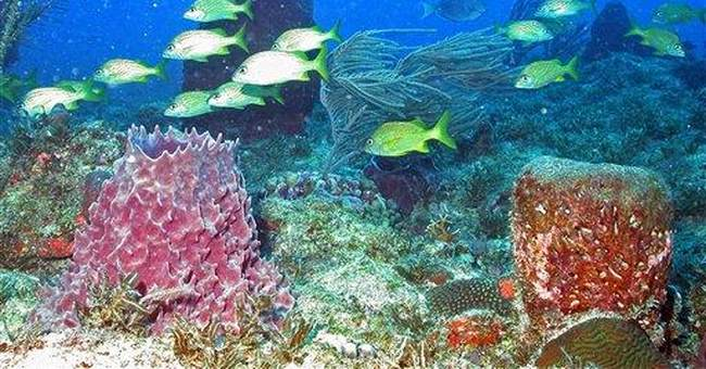 US expedition targets unexplored Puerto Rico reef
