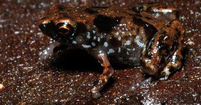 Tiny frog claimed as world's smallest vertebrate