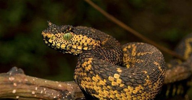 A snake named Matilda: New species in Tanzania