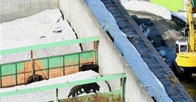 2 killed in bear attack at Japanese park