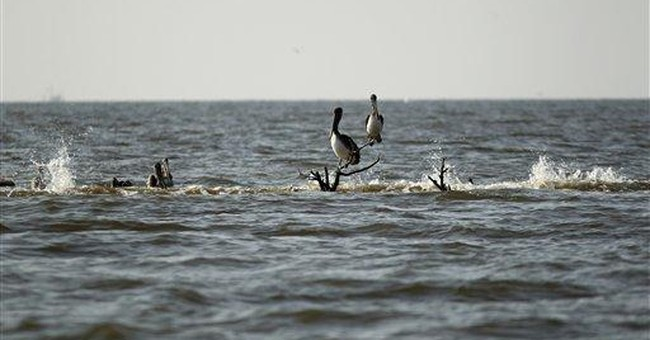 Oiled rookeries look different 2 years after spill