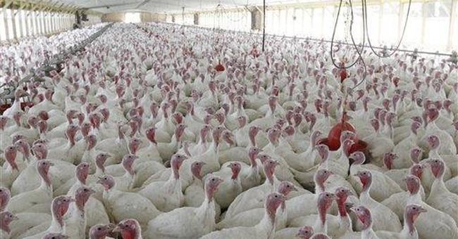 Does giving antibiotics to animals hurt humans?